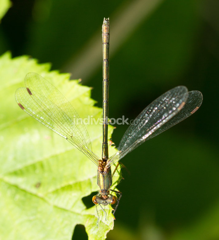 A dragonfly on a leaf