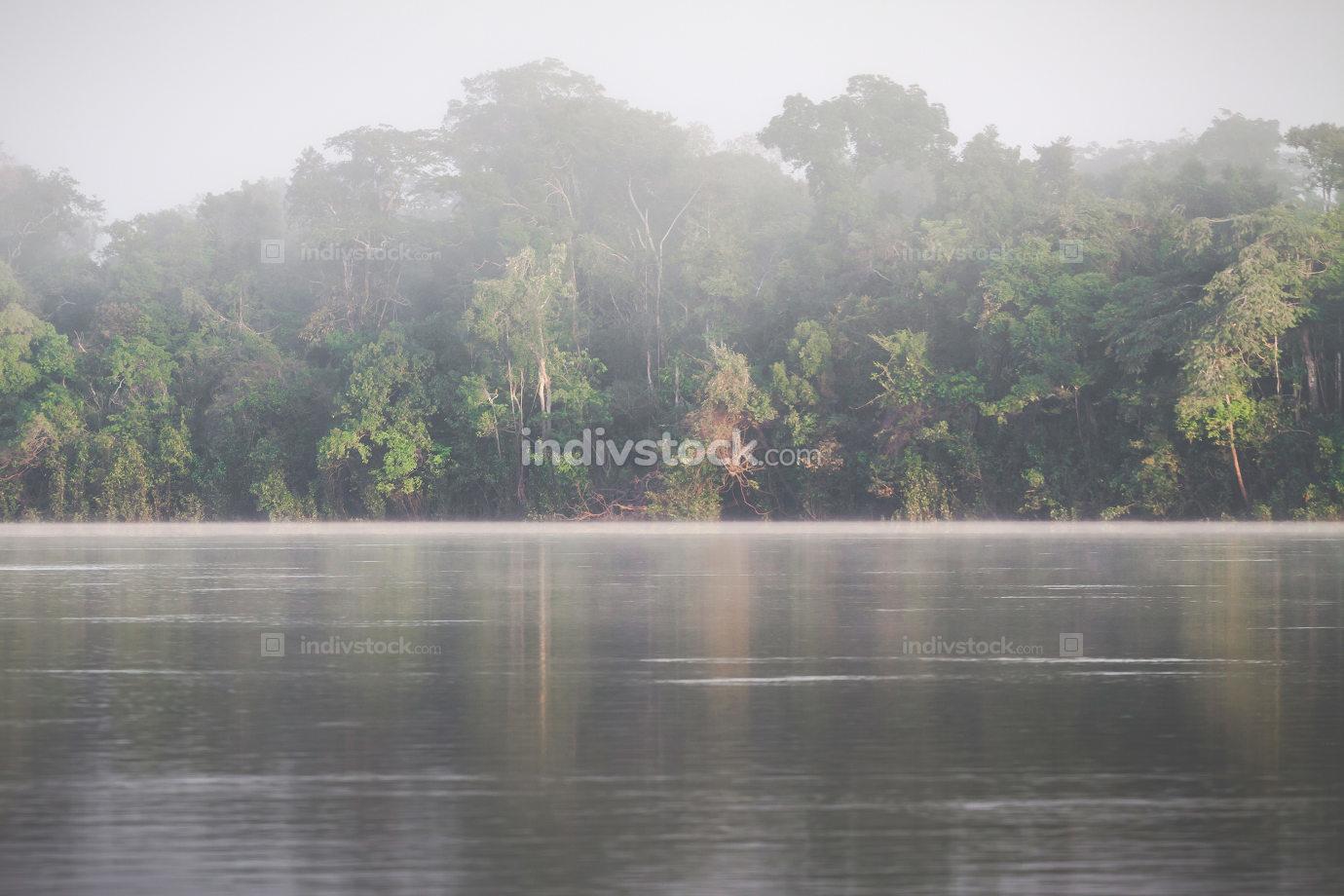 Amazon Rainforest, Peru, South America