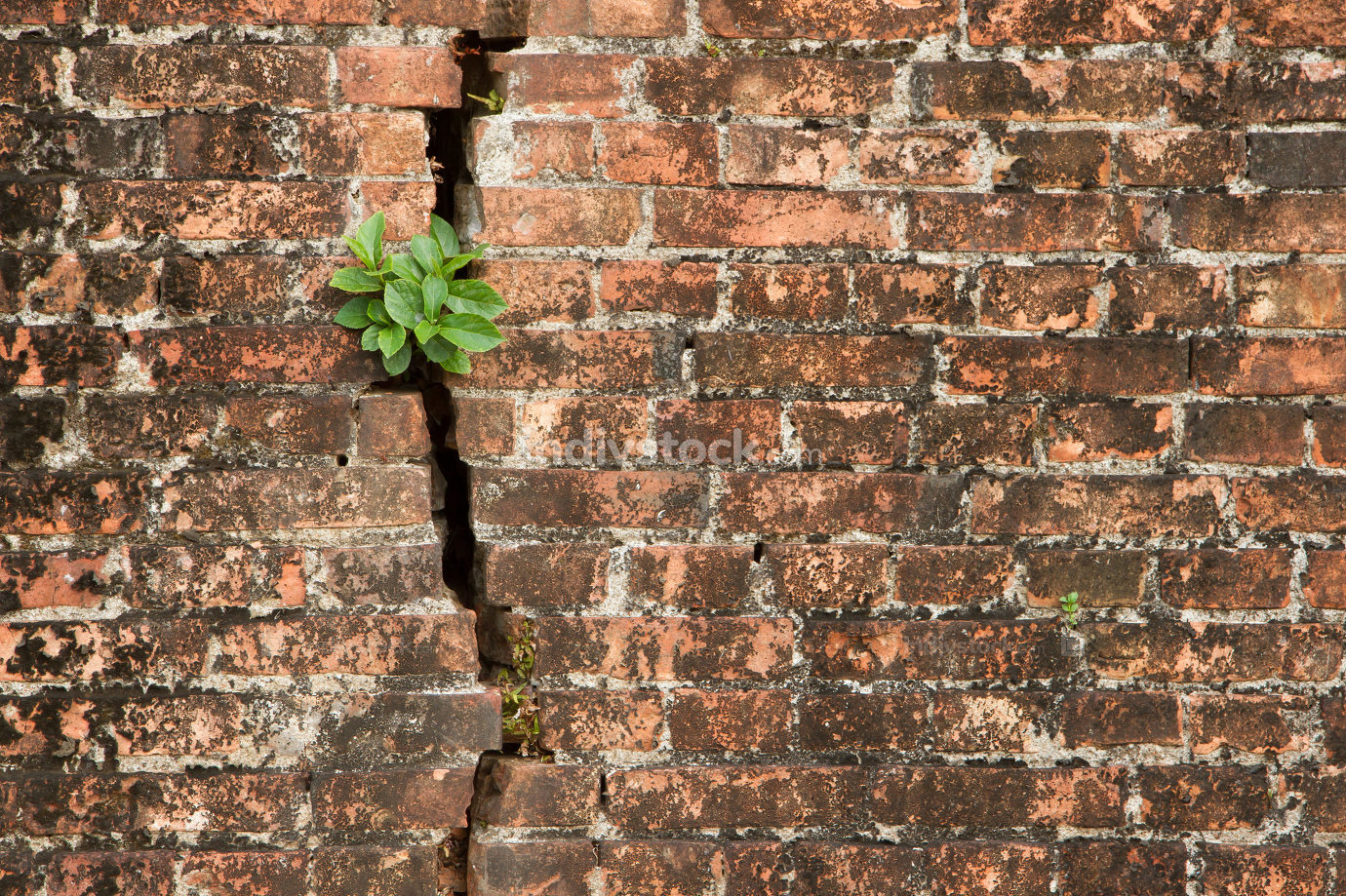 Brick wall with a crack and plants