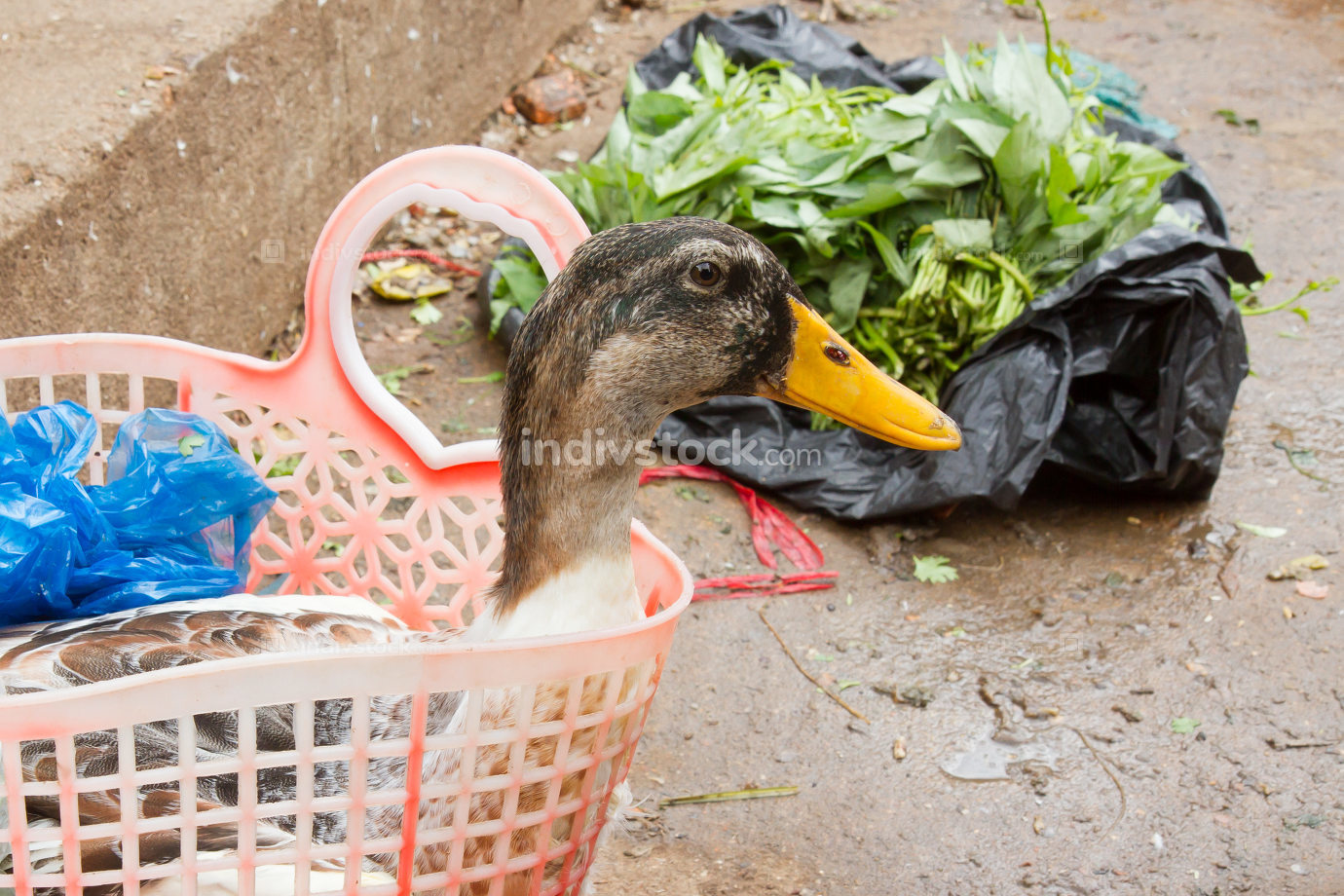 Duck bought for consumption on a Vietnamese market