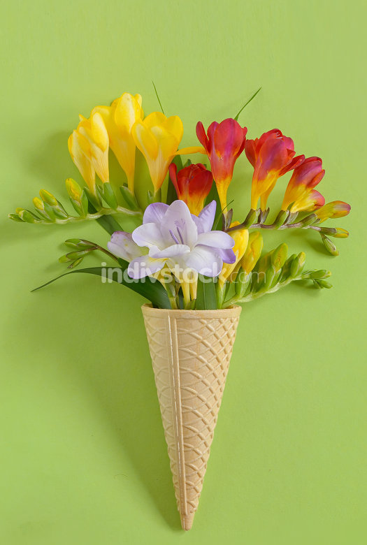 Freesias flowers in  waffles