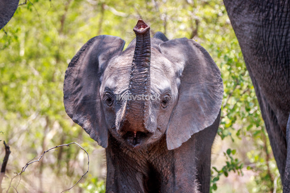 Funny Elephant in the Kruger.