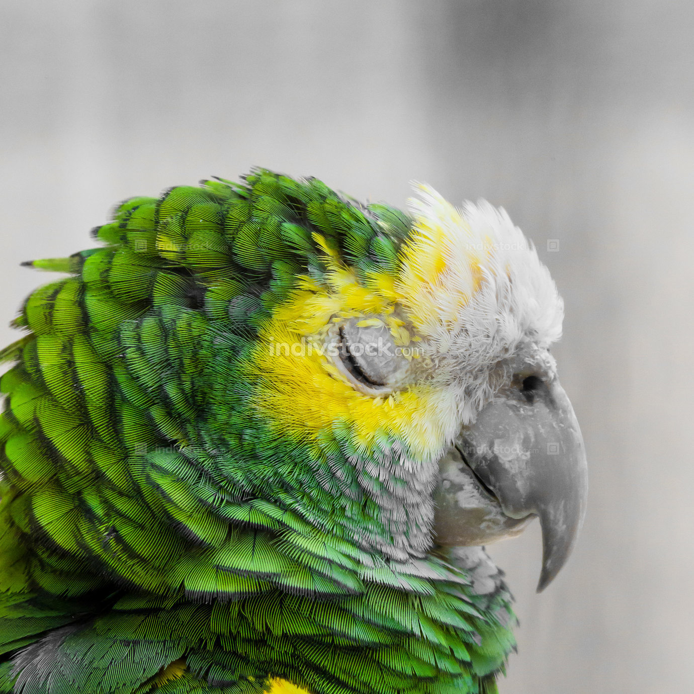 Green bird plumage, Harlequin Macaw feathers, nature texture bac