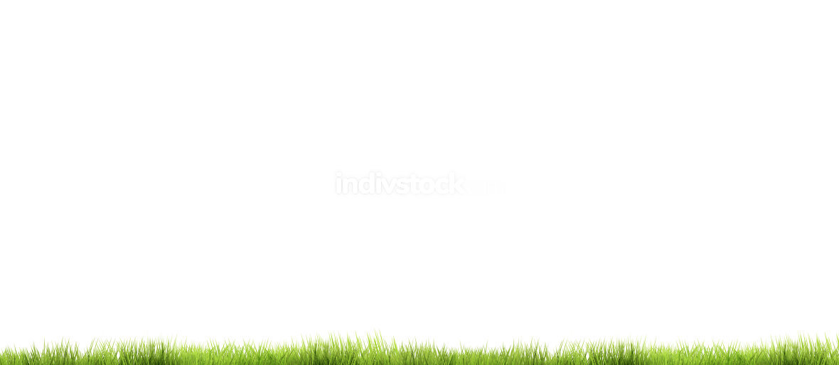 green grass 3d render background