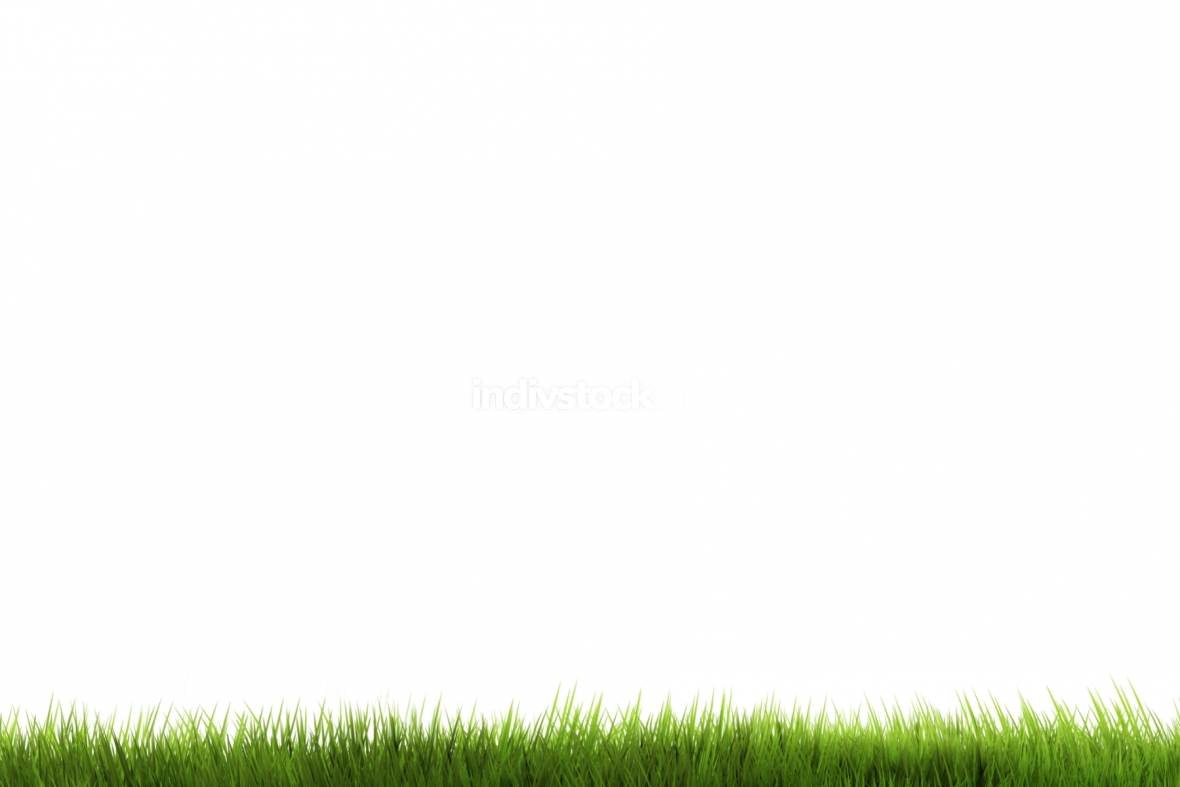 green grass 3d render isolated
