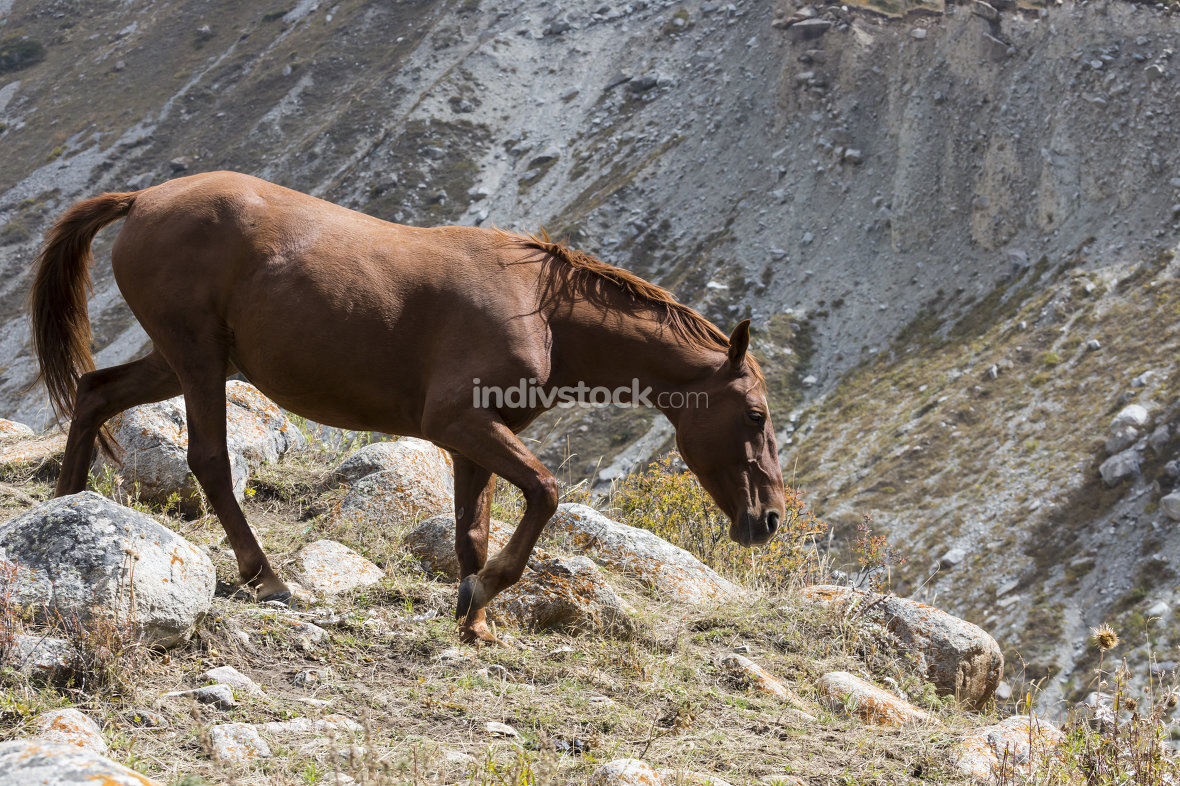 Horse in Kyrgyzstan mountain landscape at Ala-Archa gorge