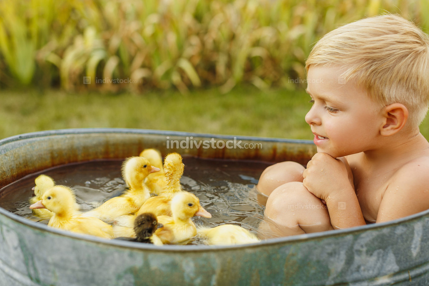 Little cute boy play with duckling in the hands