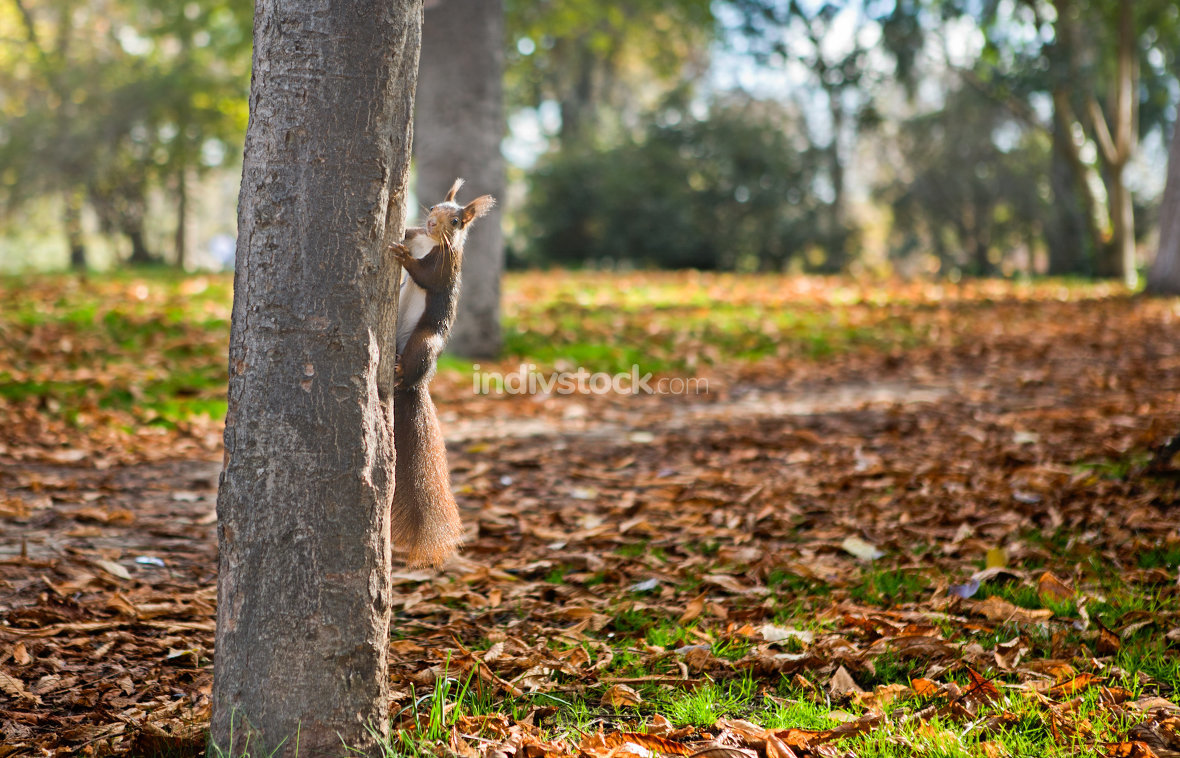 Squirrel and autumn