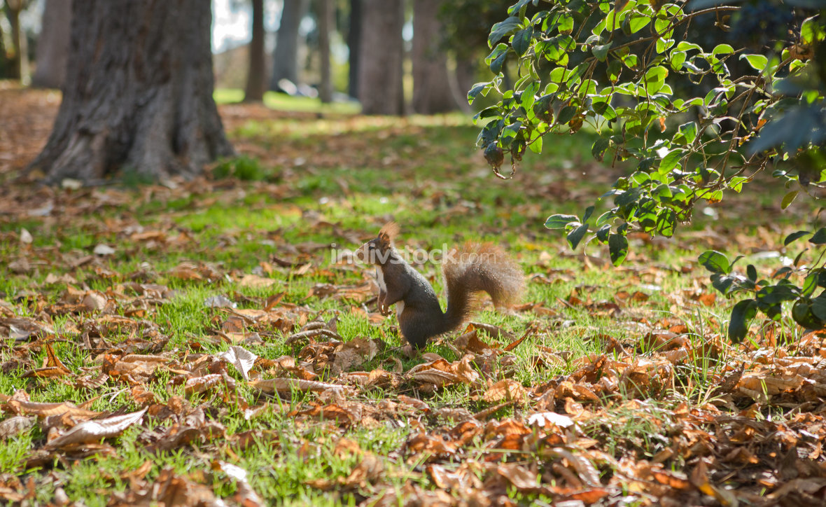 squirrel stands in the autumn forest