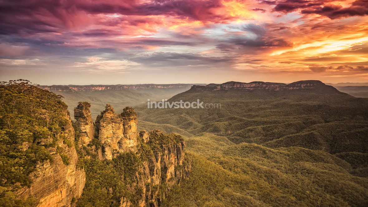 Tree Sisters Blue Mountains Australia