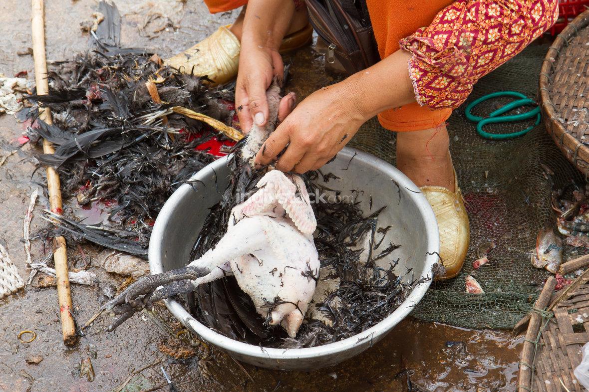 Woman plucking a chicken on a Vietnamese market