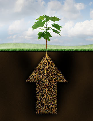 Root Of Success