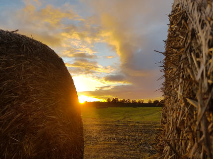 Straw bale in the sunset