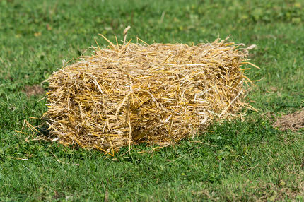 Straw bales in a meadow.