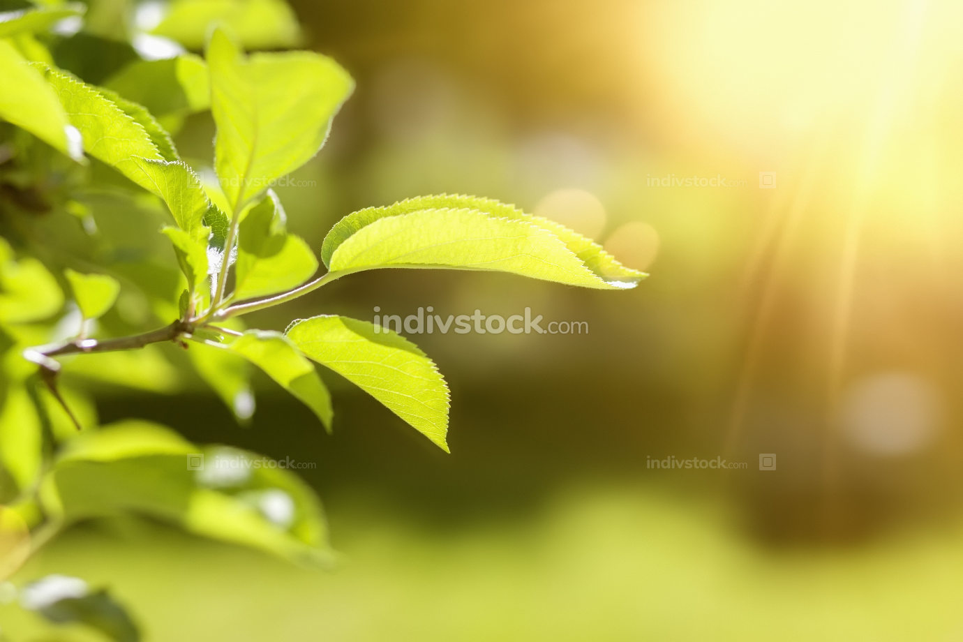 a green leaf spring background