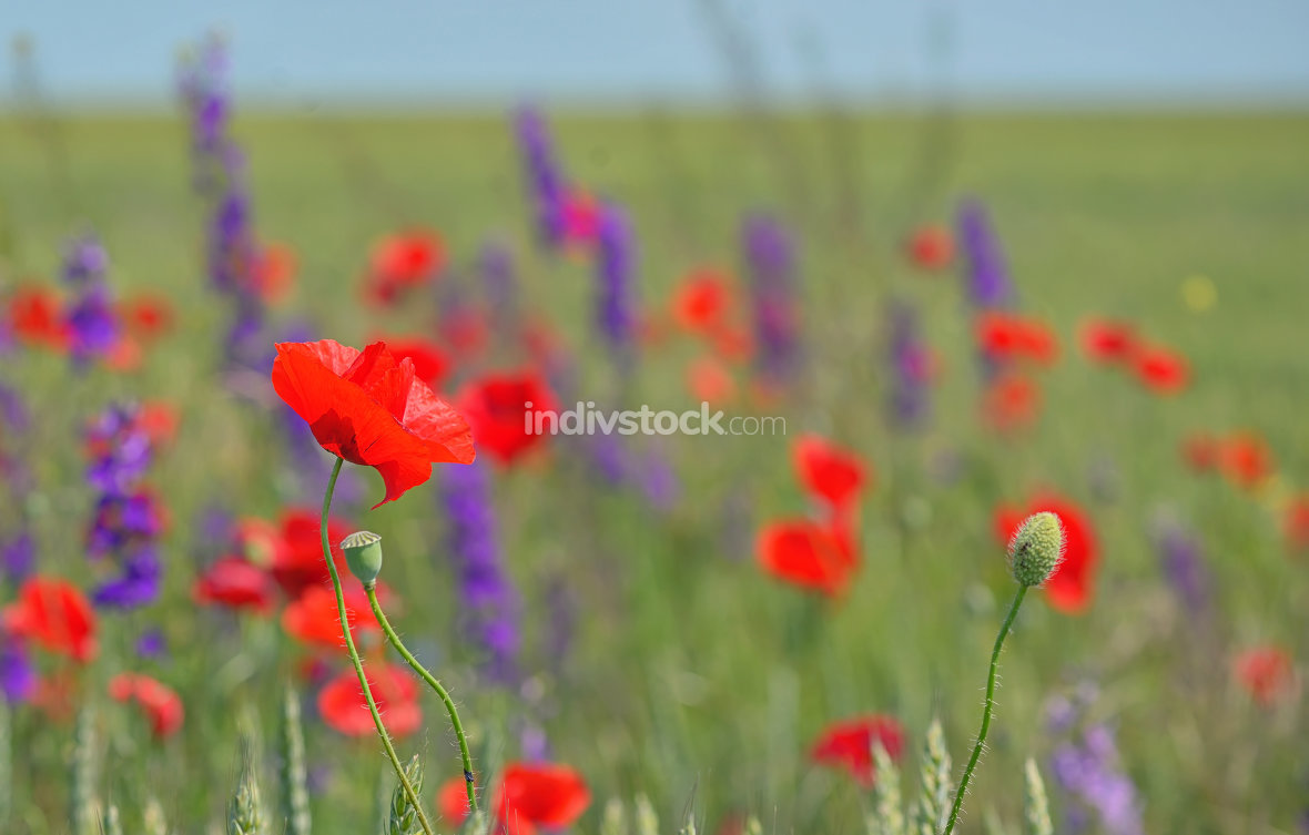 colorful flowers on field