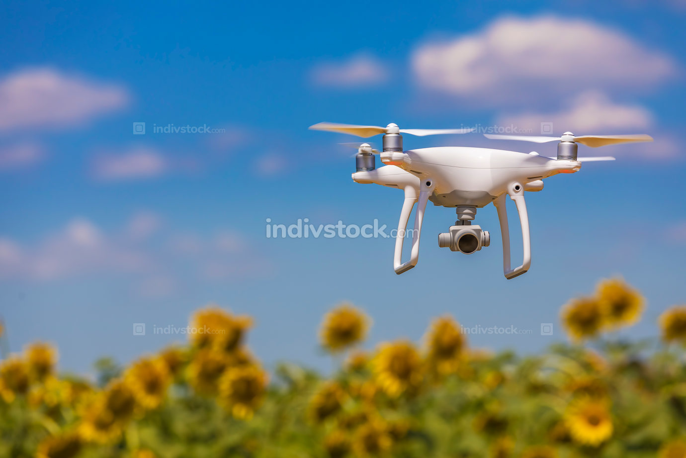 Drone hovering over sunflower field  in clear blue sky