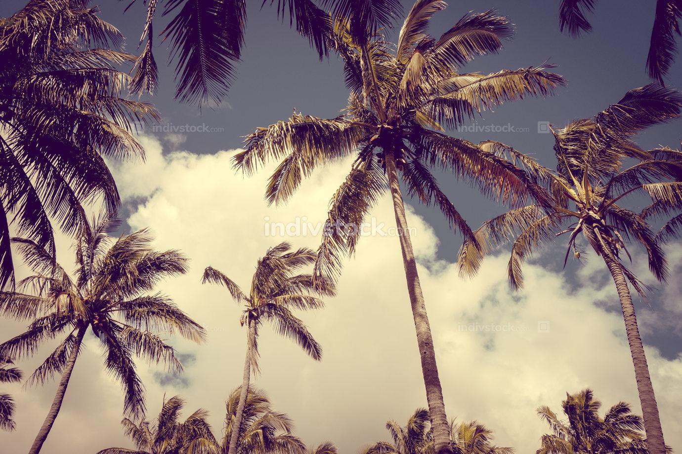 Palm trees on Anakena beach, easter island