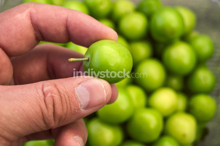Sour green plum, the most wonderful and mouth watering sour plums, sour plums for the pregnant