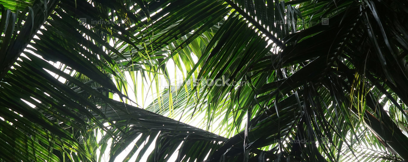 sunny tropical palm leaves background