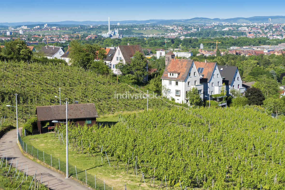 vineyard Stuttgart city
