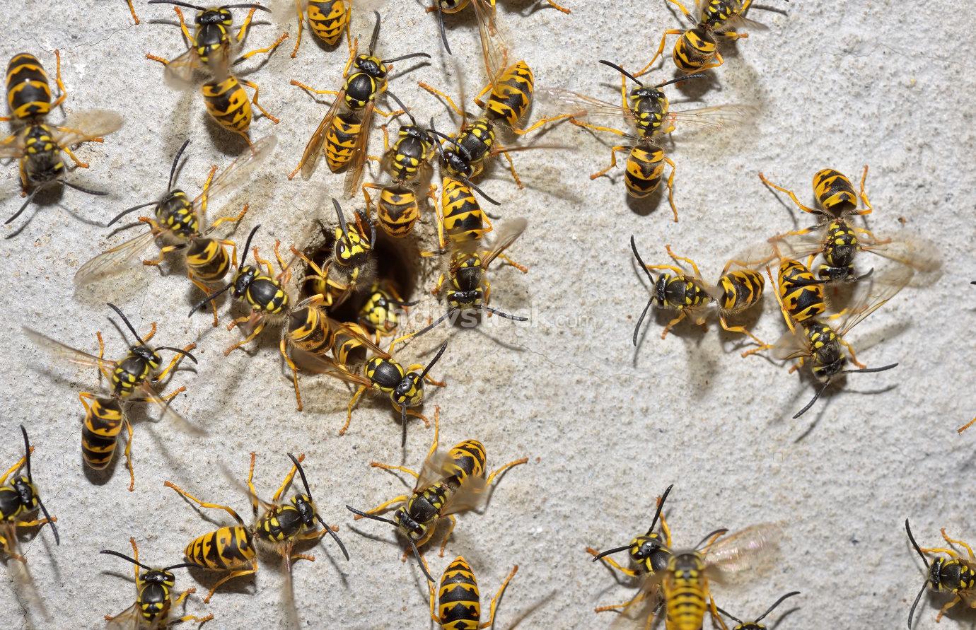 Wasp nest macro