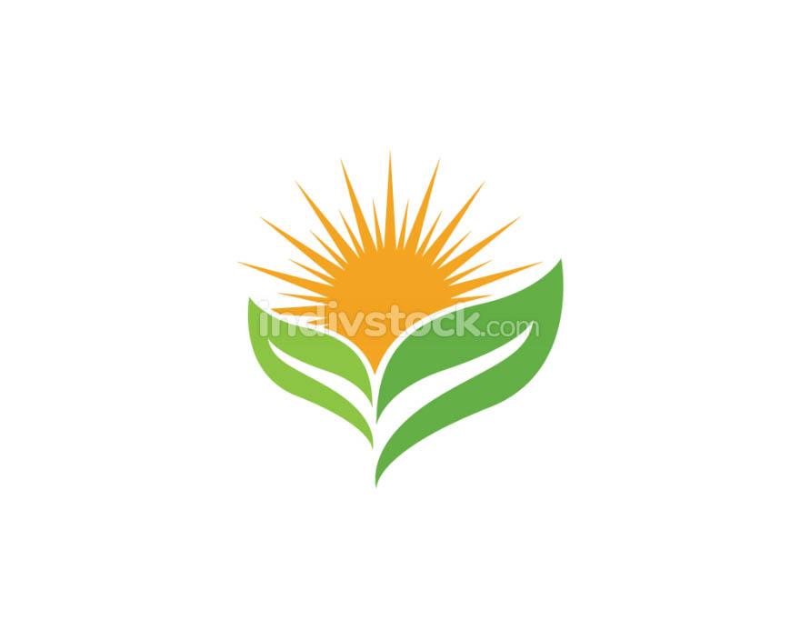 Tree leaf Logos nature element