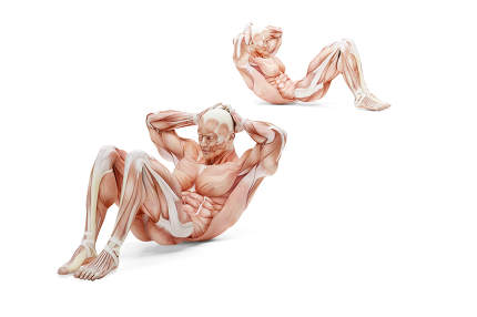 Abdominal crunches exercise. Anatomical 3D illustration. Isolate