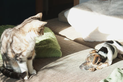 cat and dog at home friendship