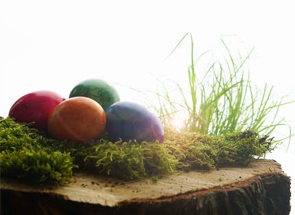 colorful easter eggs with green moos and grass at wooden block