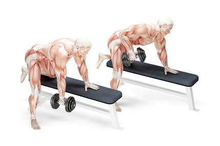 Dumbbell Rows exercise. Anatomical 3D illustration. Isolated wit