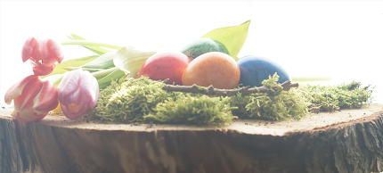 easter eggs and green moos at wooden block