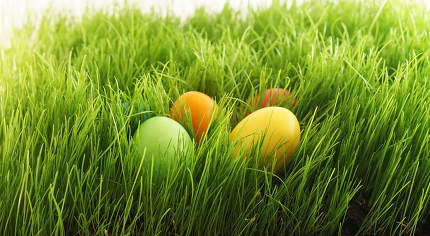 easter eggs in green grass outdoor in garden