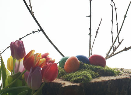 easter eggs tulips wooden block and easter branch