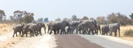 Elephant family crossing a road