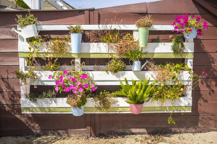 Flowerpots hanging from a pallet on the wall