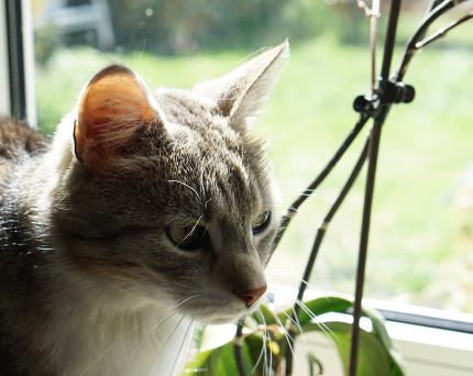 free download: cat behind the window at green blurred garden