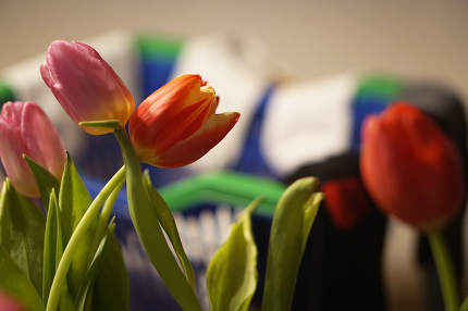 free download: mothers day flowers and laundry