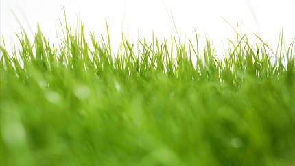 green grass meadow background blades of grass green nature lawn