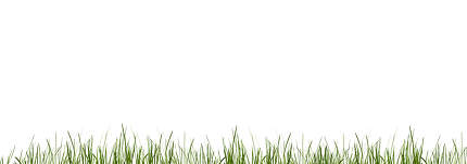 green grass meadow lawn blades of grass 3d-illustration