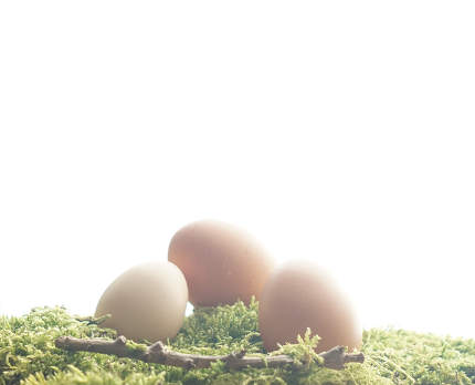 light brown real natural easter eggs at green moos