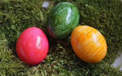 real colorful Easter eggs at green real moos