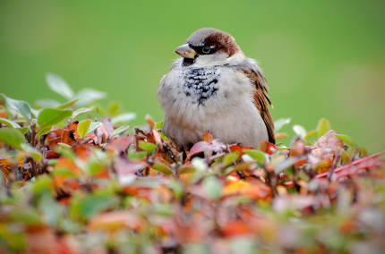 Sparrow on bush