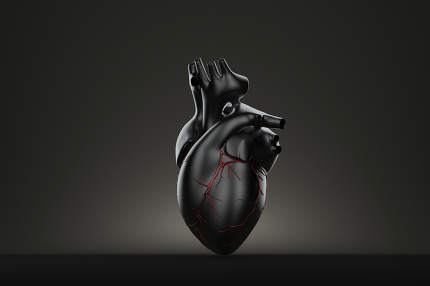 Still life human heart. Contains clipping path