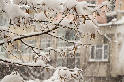 White winter background with snowy branches