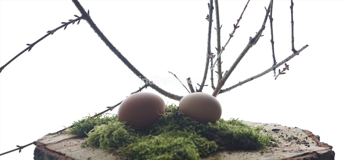 brown eggs at green moos with branch