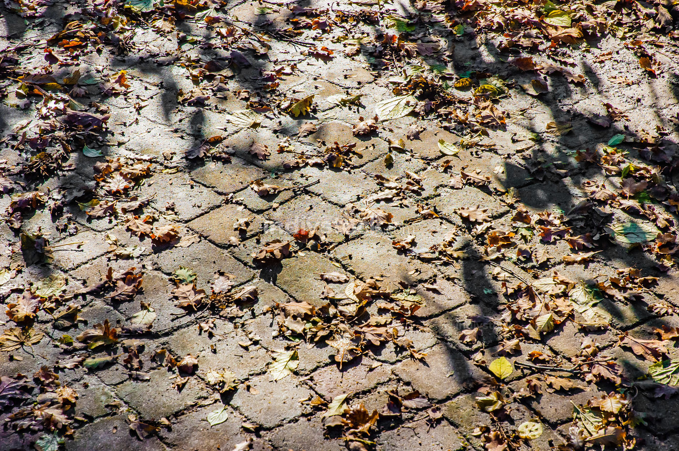 Cobblestones covered by leaves