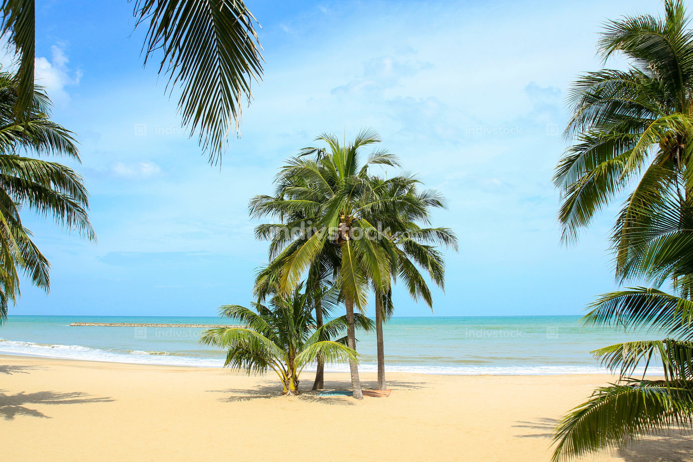 Coconut Palm Tree on The beach in Thailand.