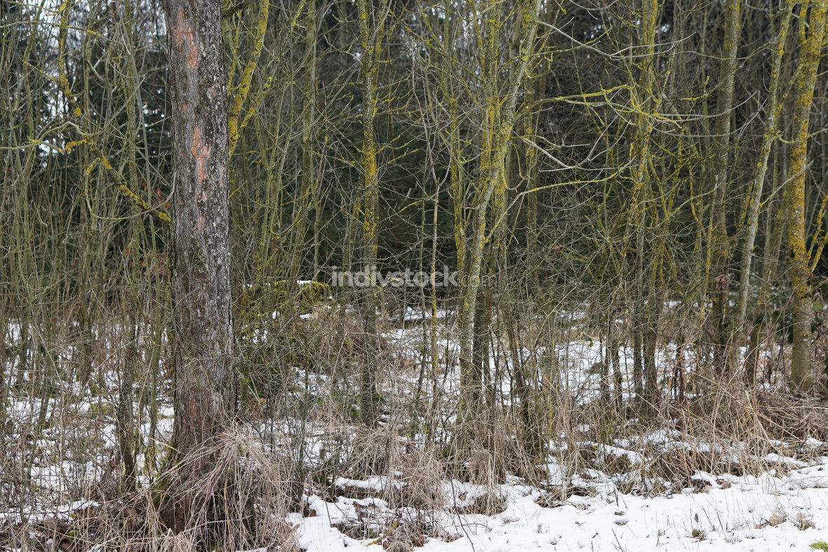 cold winter snow trees forest