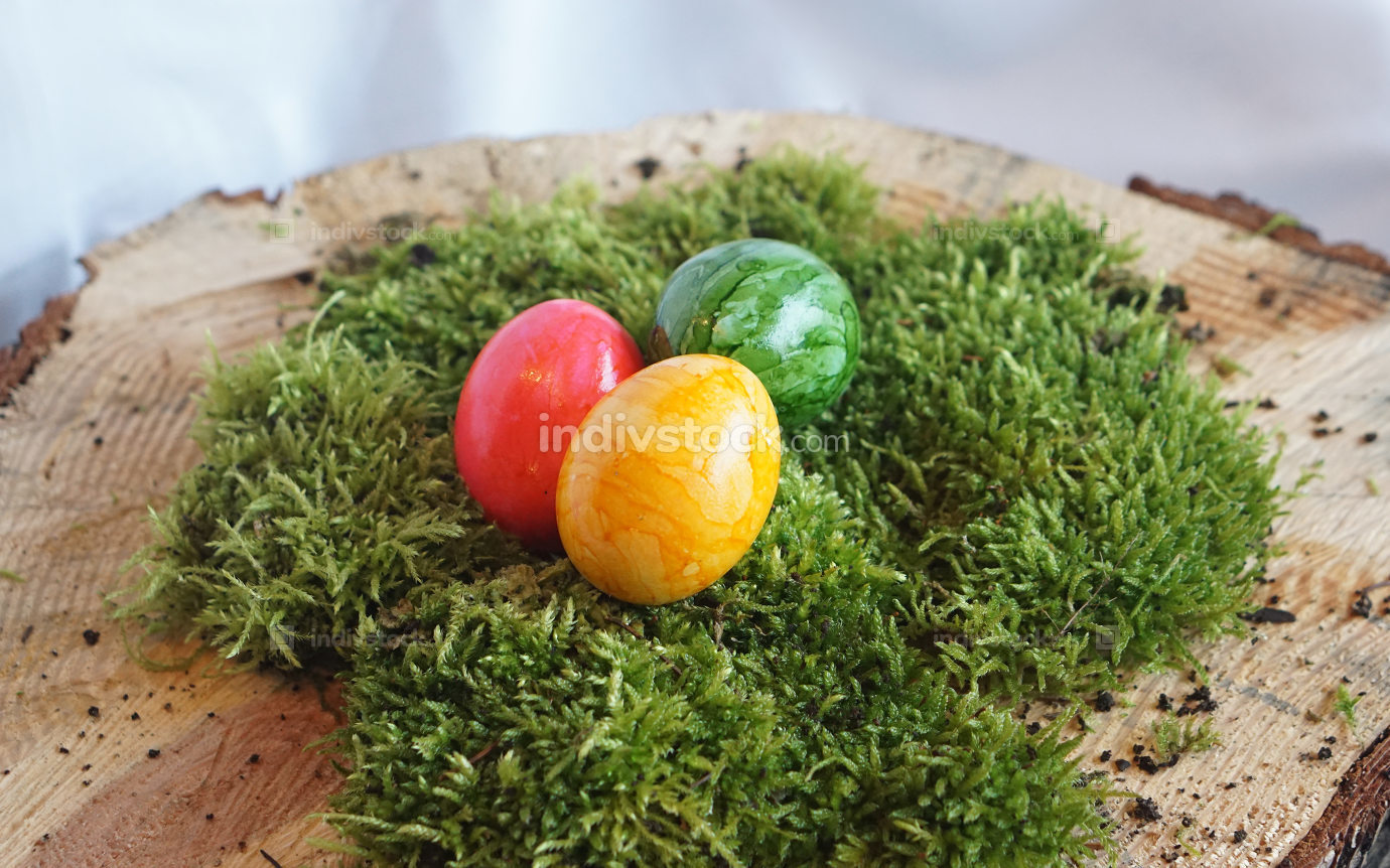 colored real easter eggs on real green moss